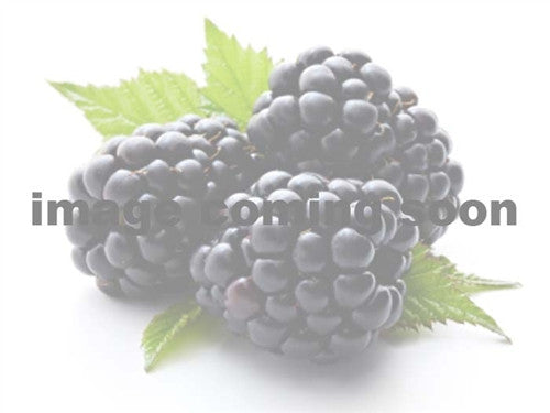 BLACKBERRY -  EBONY HARDY