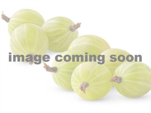 CANADIAN GOOSEBERRY - new for 2017