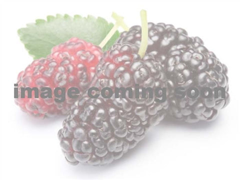 CANADIAN MULBERRY - Taylor