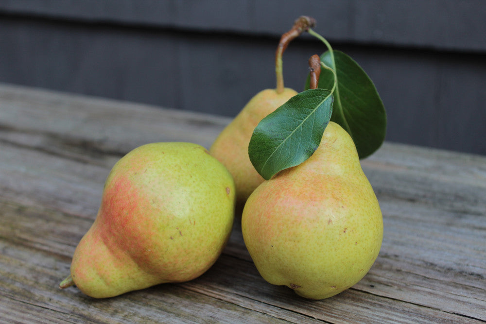 European Pear - BO BART