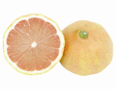 LEMON - PINK LEMONADE or PONDEROSA Tree