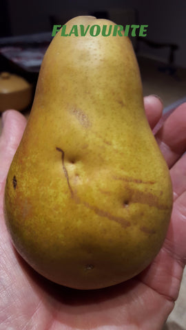 A Best Euro Pear -  FLAVOURITE