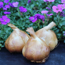 Load image into Gallery viewer, Oak Smoked Garlic Bulb