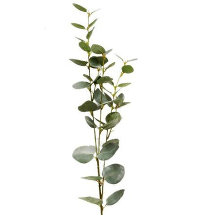 Eucalyptus Spray Green