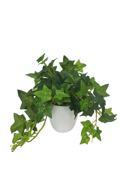Potted Sage Ivy White Pot