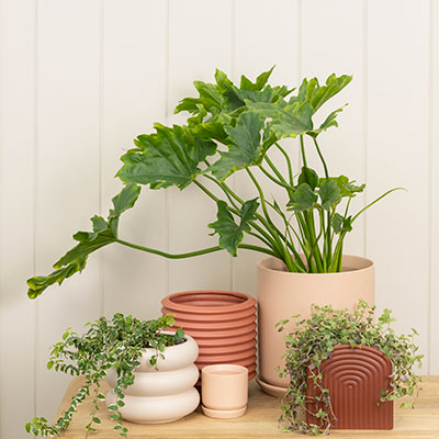 Berlin Self Watering Planter - Parchment