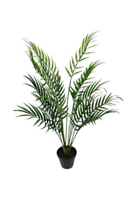 Areca Palm Tree Potted 1m