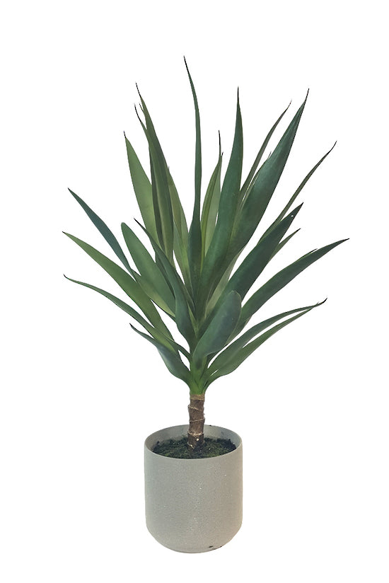 Potted Yucca in Cement Pot