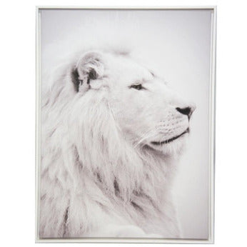 Handsome Lion Framed Canvas