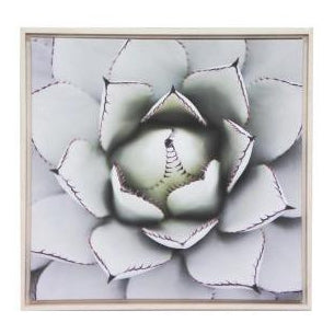 Succulent Framed Canvas