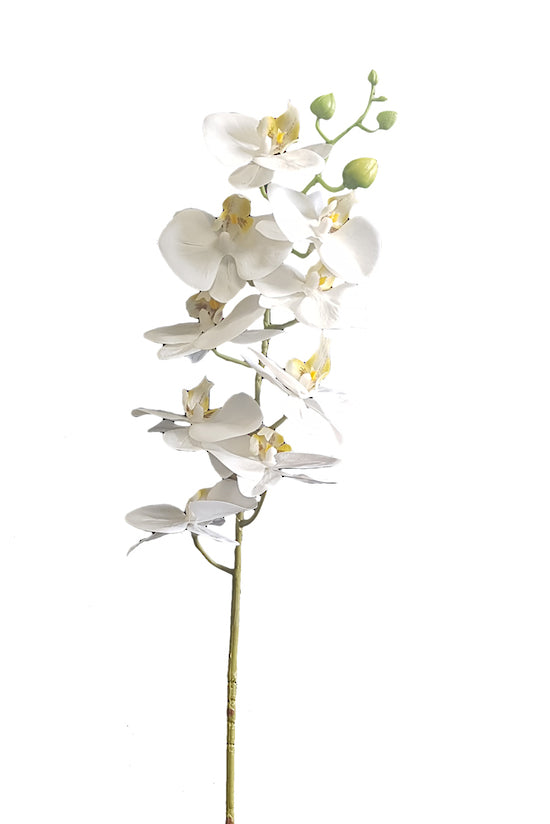 Real Touch Moth Orchid White
