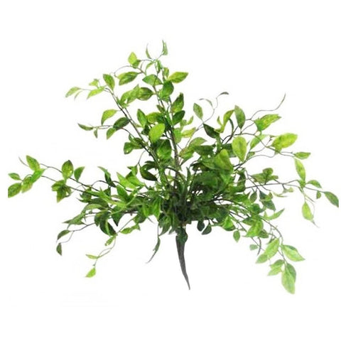 Nandina Bush Green