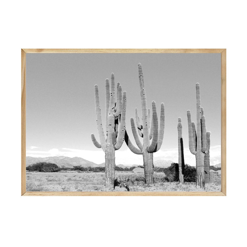 PAPIER HQ | CACTUS PHOTOGRAPHY PRINT