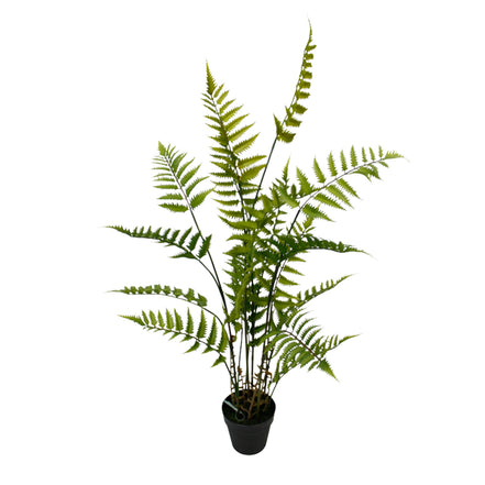 Boston Fern Bush