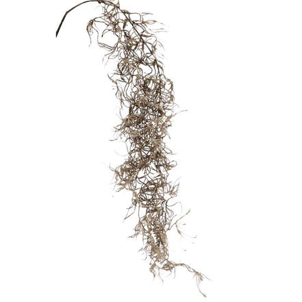 Dried Spanish Moss - Light / Dark Brown