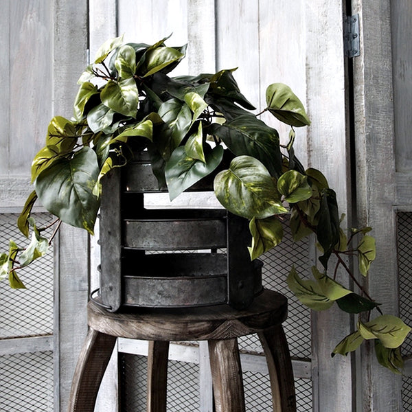 Variegated Pothos Hanging Bush