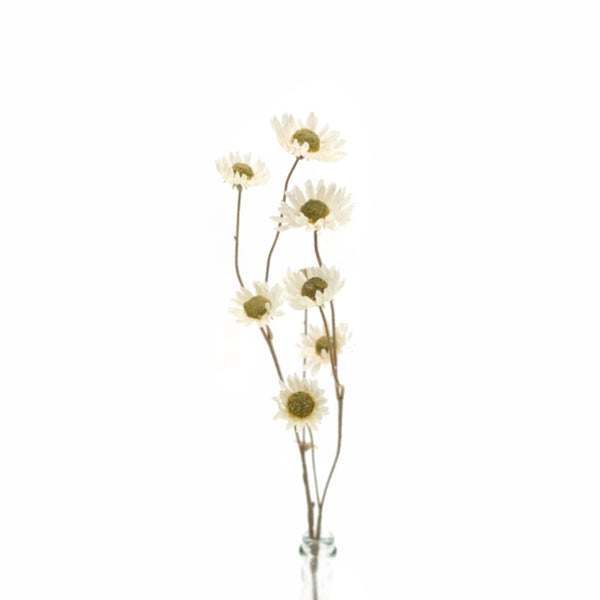 Dried Look Straw Flower