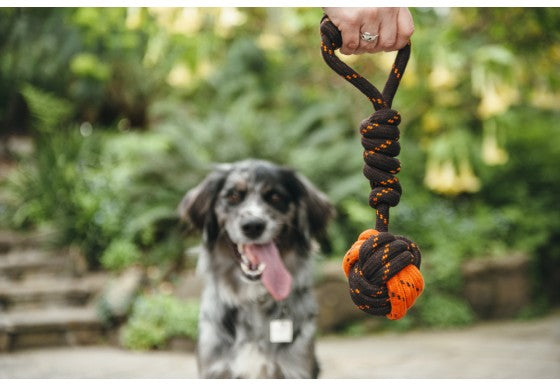 P.L.A.Y Pet Tug Ball Rope Dog Toy, Small/Large