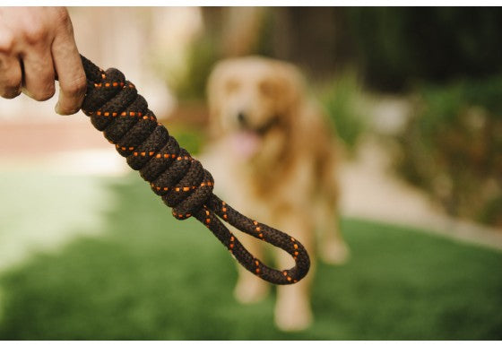 P.L.A.Y Pet Tug Rope Dog Toy, Small/Large