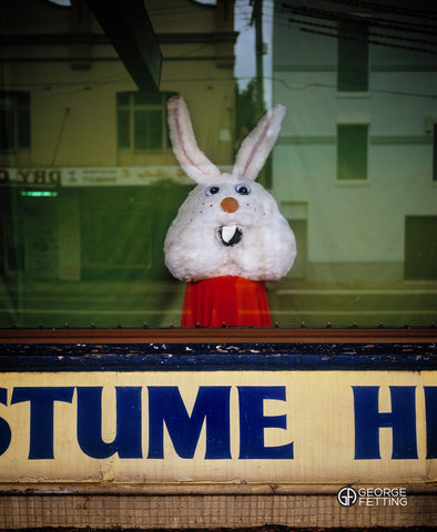 Lonely Rabbit Head Inner West Sydney