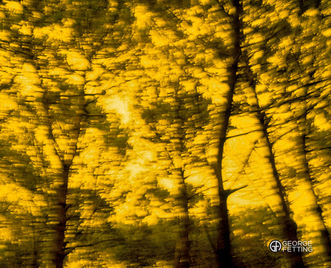 movement seen through blurred trees