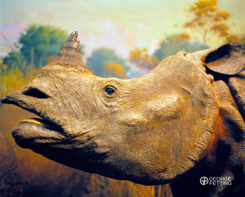 Detail of Rhino The Museum of Natural History NYC
