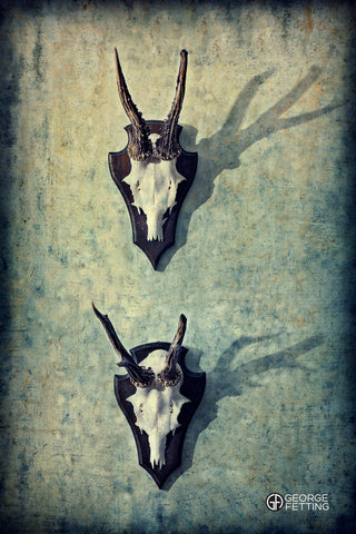 two antler horns mounted hang on a wall