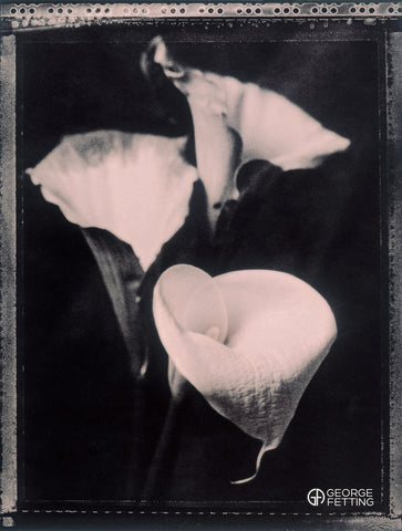 "Arum Lily taken with 4x5"" polaroid film"