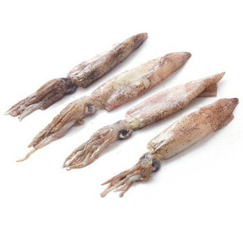 Royal Baby Squid - 1LB