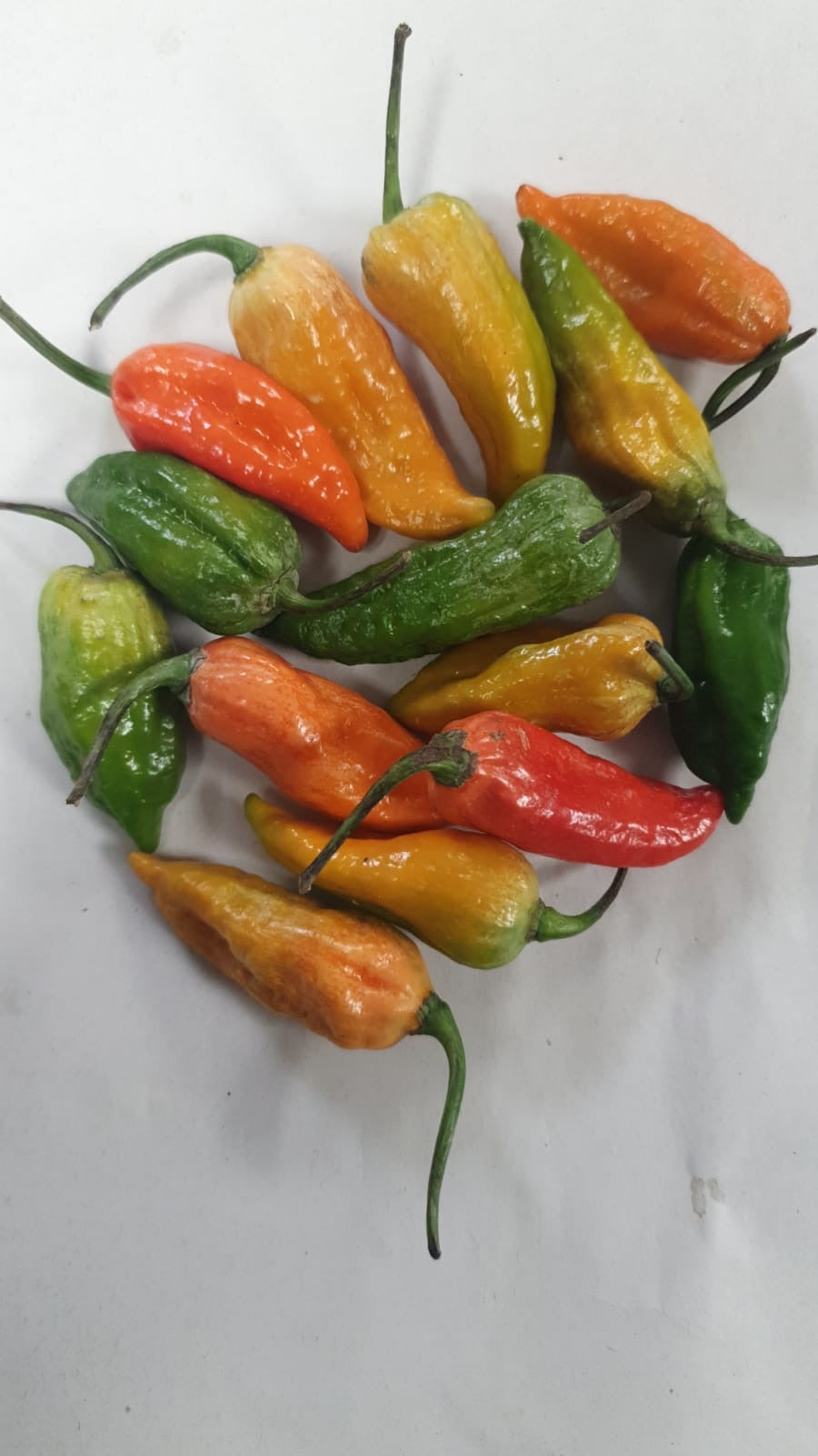 Naga chillies 4pieces