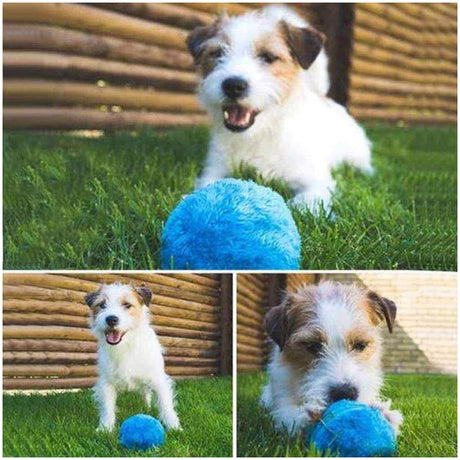 AllNowTrending Pets Activation Ball
