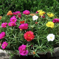 1000Pcs Plant Flower Seeds for Beautiful Garden Decoration