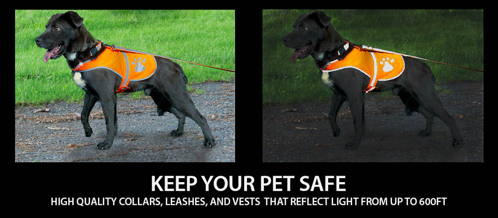 Demonstrate collar, leash, and vest reflecting in the dark