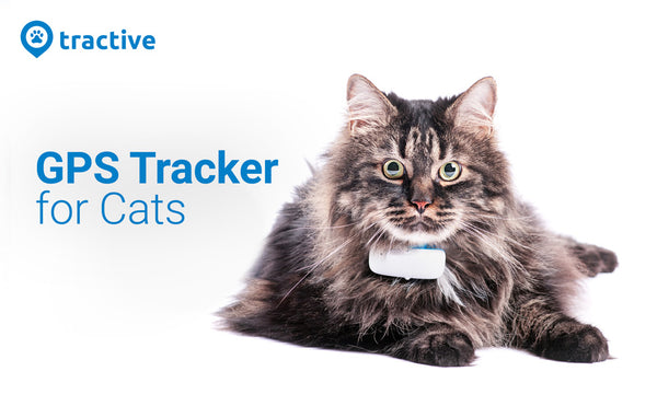 smart pet devices cats tracker