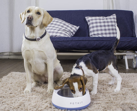 smart pet devices with there two dogs