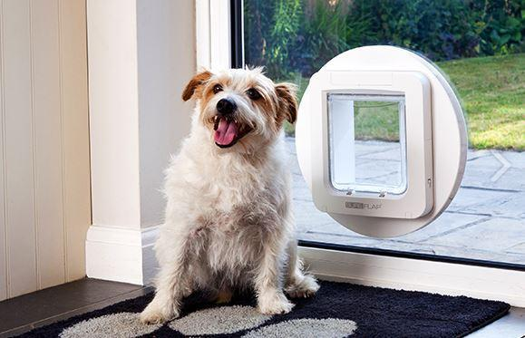 SureFlap Microchip Pet Door - With Curfew Control, For Larger Cats & Small Dogs. - Cat Out Of House.co.uk