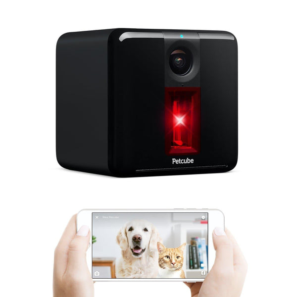 Petcube Play Smart Pet Camera. Remote Dog/Cat Monitoring with HD 1080p Video. - Cat Out Of House.co.uk