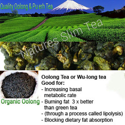 Oolong slimtea benefits