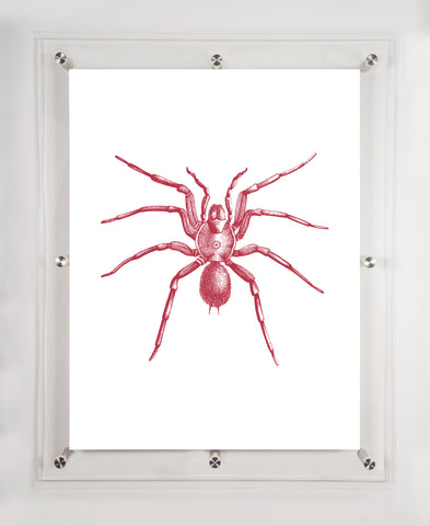 """SPIDER"" IN CRANBERRY 18"" x 24"""