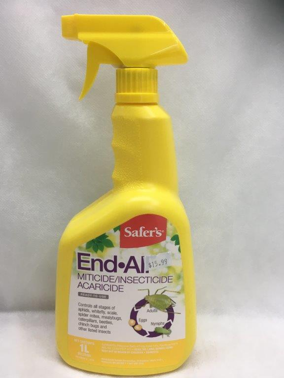Safer's End All II