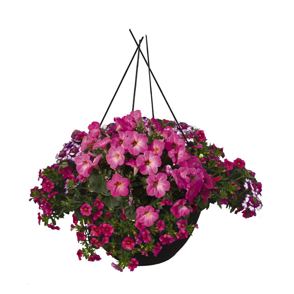 Shocking Rose Hanging Basket