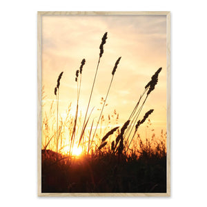Sunset - Plakat