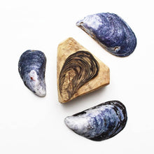 Load image into Gallery viewer, Mussels 2020