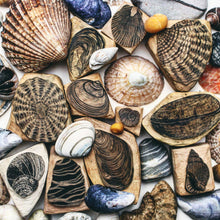 Load image into Gallery viewer, Seashells III 2020