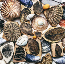 Load image into Gallery viewer, Seashells IV 2020