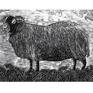 Molly Lemon Wood Engraving Sheep