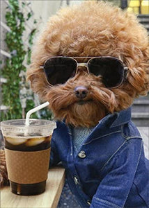 Cool Dog With Coffee Birthday Card