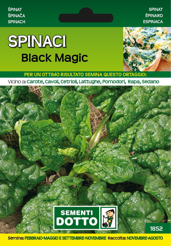 Spinacio Black Magic