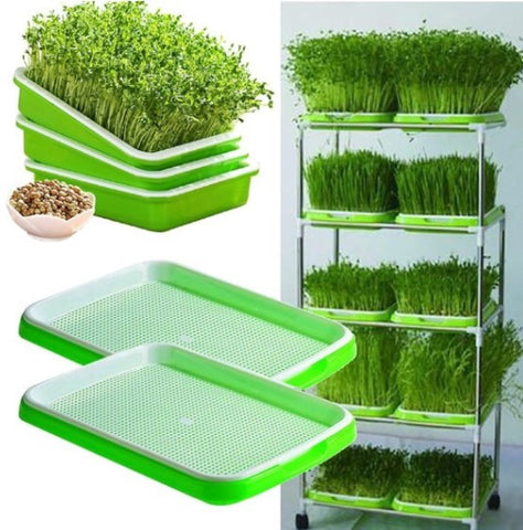 Double tray seed microgreens and sprouts