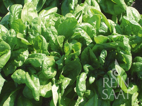 Spinach Organic Seeds